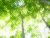 lightened_forest