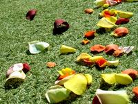 flower_petals