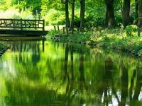 park_tree_green
