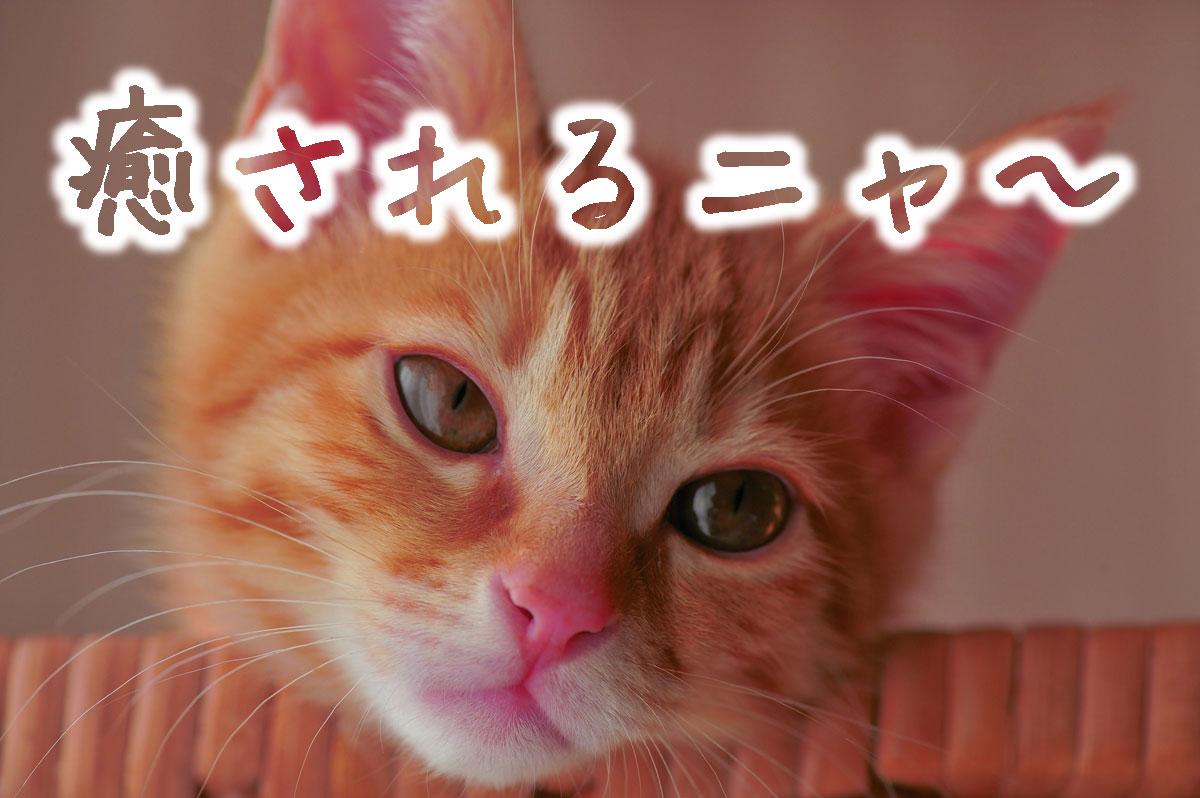 癒しの子猫